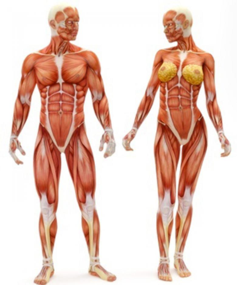 vucudumuzdaki-organlari-yenileyebilecegiz_780x936-xxmcbg38vx